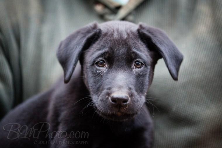 Webber-Dogs-5968