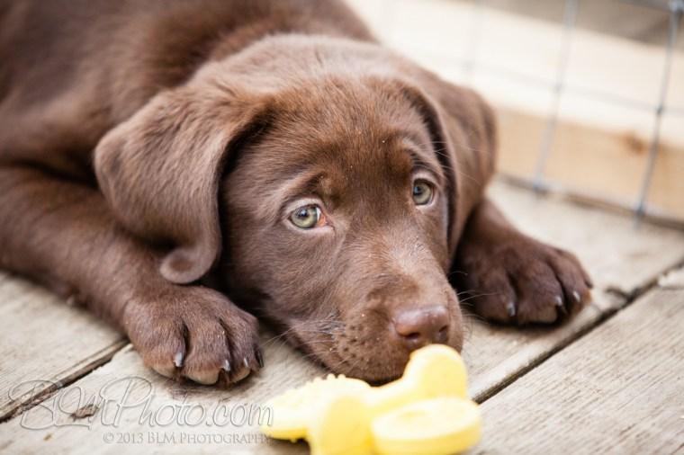 Webber-Dogs-5974