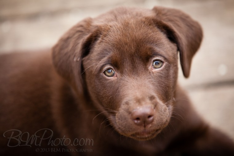 Webber-Dogs-5988