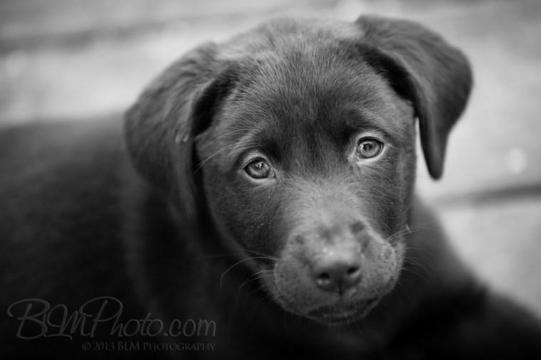 Webber-Dogs-5989