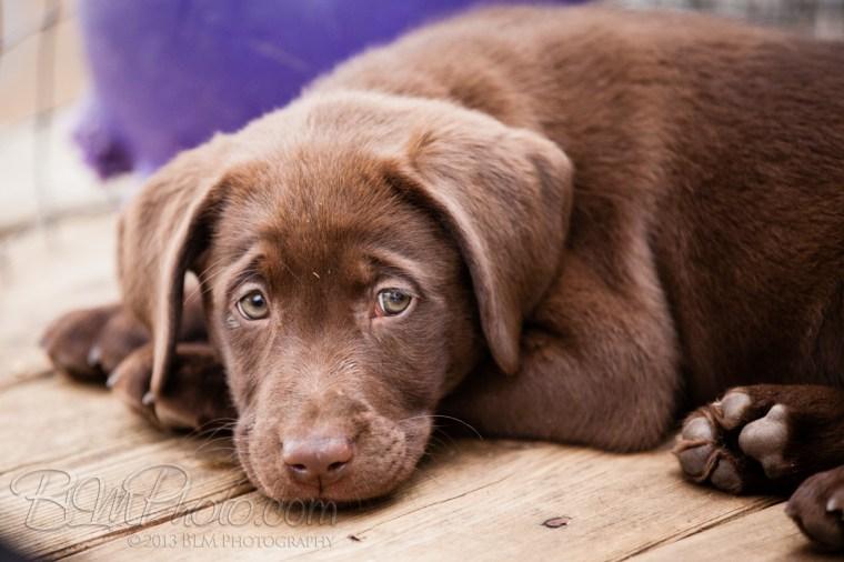 Webber-Dogs-5991