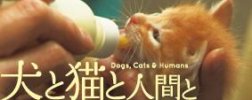 犬と猫と人間と。