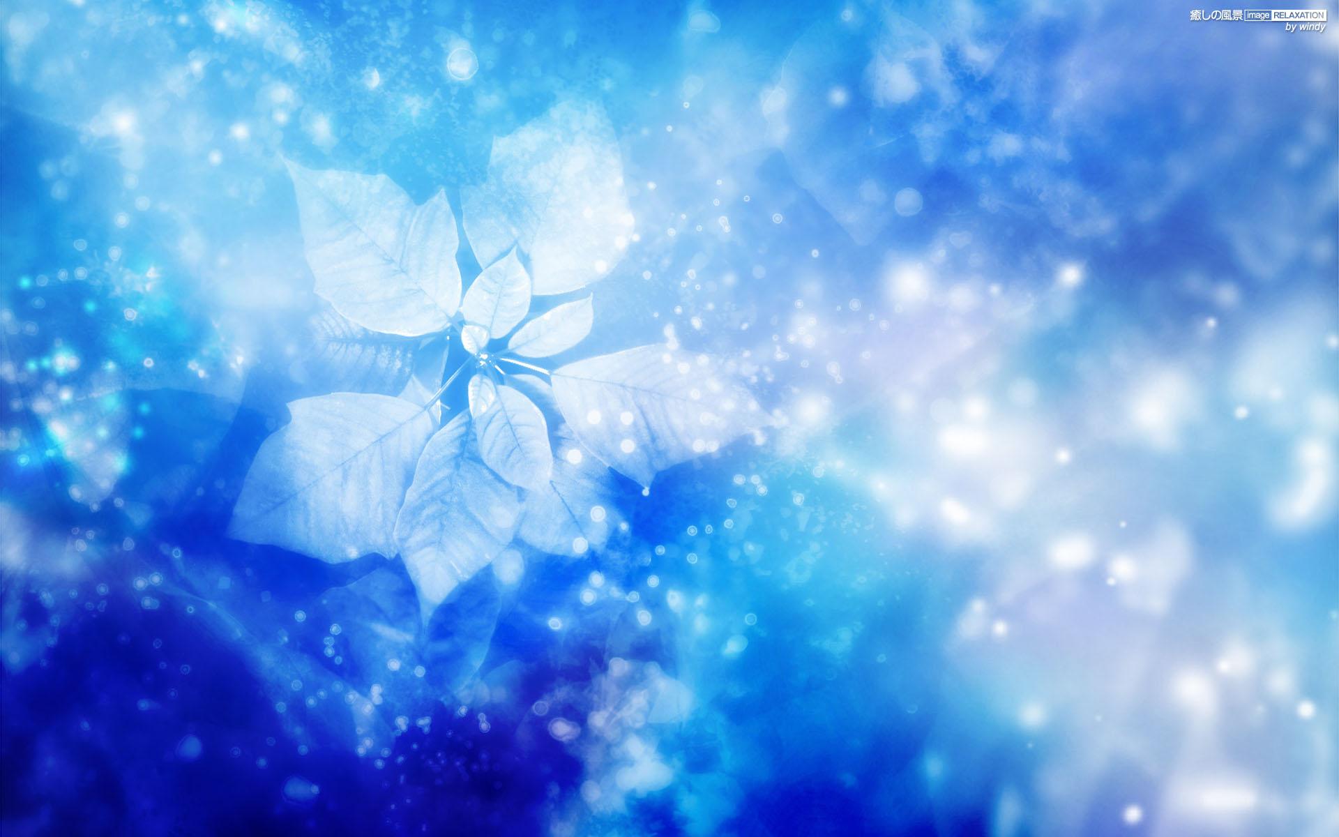 3d Design Flower Wallpaper ポインセチア 壁紙(ブルー系)