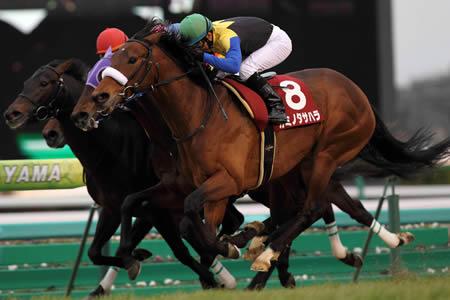 【競馬】 カミノタサハラ、ひっそりと引退
