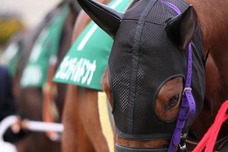 【競馬】 ジェンティルドンナが有馬記念回避を正式発表 今後はドバイ遠征を目標に
