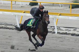 【競馬】 ドゥーナデン、結局有馬記念を回避し香港へ…