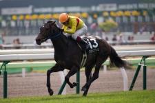 【競馬】 ラブイズブーシェ、来年は凱旋門賞を目指す! 調教師「早めに現地に連れて行って、前哨戦はフォワ賞あたり。鞍上はフルキチ」