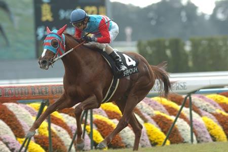 【競馬】 タマモベストプレイの長距離戦出走反対!  【阪神大賞典】