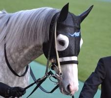【競馬】 ゴールドシップ、今年の有馬記念がラストランに ビッグレッドファームで種牡馬予定