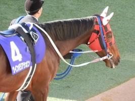 【悲報】 ウインバリアシオン、種牡馬になれず…乗馬へ