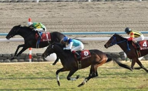 【競馬】 サトノノブレス、有馬記念へ 里見オーナーはダイヤモンドとの2頭出しに