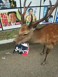 【〇鹿】選挙ポスターを食うアホが現れる