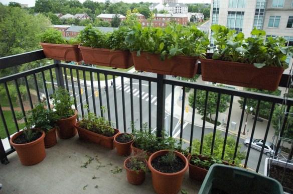 ハーブをベランダ菜園してたらテンションの高い警察官6人がやってきた