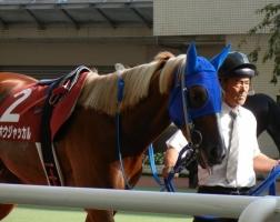 【競馬】 トーホウジャッカルが引退 種牡馬に