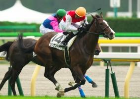 【競馬】 ショウナンアデラ、再び骨折…全治6か月  二ノ宮師「復帰を目指す」