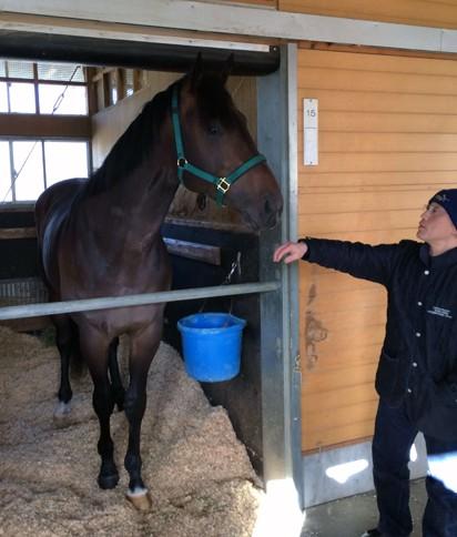 【競馬】 ウオッカの初子ボラーレ、現在615キロwwwww ダートデビューへ…