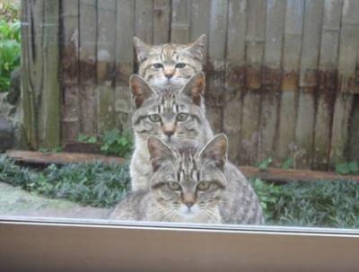 """ネコは飼い主を""""大きくてばかなネコ""""だと思っている? … ネコはイヌと同じようには人間をとらえていないらしい"""
