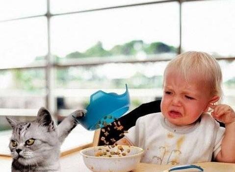 油断をしてたらトンビとか猫におそわれた