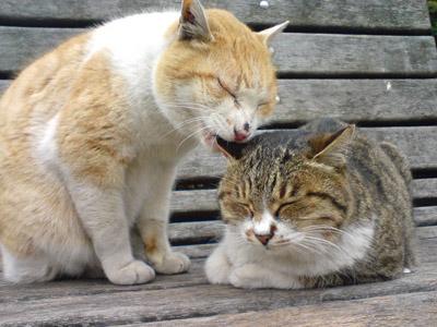 【閲覧注意】猫も共食いするんだな・・・・・・・・・(画像あり)