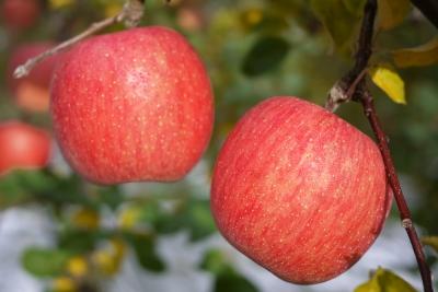 毎日リンゴ2個食べた結果wwwwwwwwwww