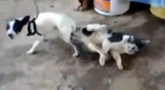 犬「もうネコでもいいわ!」結果・・・抜けなくなるwww