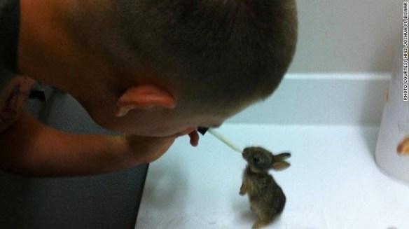 【画像】 手のひらサイズの 「ウサギ」 が 可愛すぎて ヤ バ イ !!!!!!!!!!!!!!
