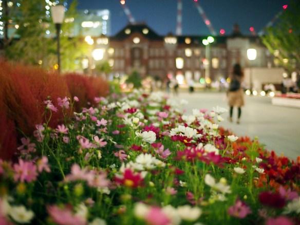JR東京駅の赤れんが駅舎 大正期復元後初の週末は観光客らで大にぎわい 日没後にはLED照明によるライトアップも(*`・ω・´)