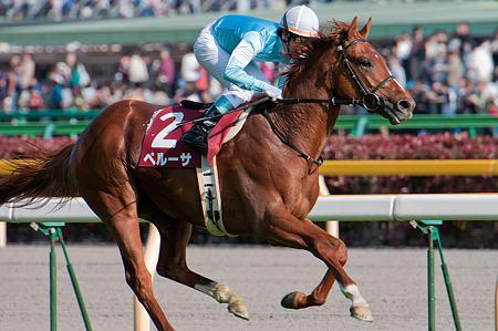 【競馬】 青葉賞馬はいつになったら日本ダービーを勝てるのか?