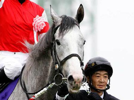 【競馬】 今年の年度代表馬を予想しようか