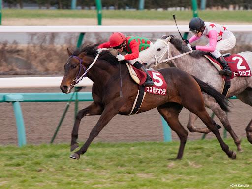 【競馬】 コスモオオゾラ、屈腱炎再発で乗馬に