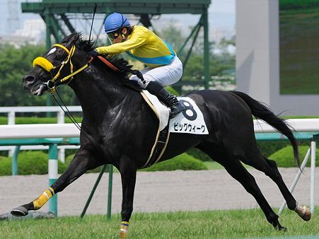 【競馬】 菊花賞馬が種馬になれず乗馬wwwwwwwwwww