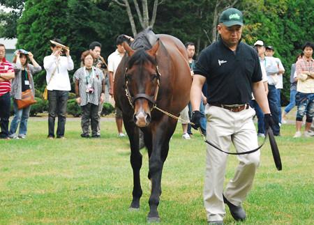 【競馬】 2013年のメイショウサムソンの種付け数→32頭