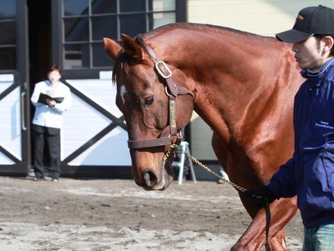 【競馬】 マーベラスサンデーが死亡 1997年宝塚記念馬