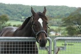 【競馬】 2012北米リーディング種牡馬が日高にいるらしい
