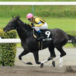 【競馬】 グレープブランデー、韓国遠征の鞍上は吉原騎手に決定