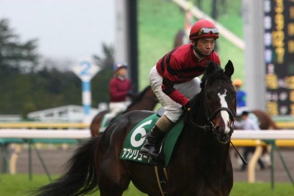 【競馬】 アブソリュート(セン8)が引退、乗馬に…09年の東京新聞杯・富士S勝ち馬