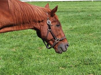 【競馬】 イブンベイ(牡28)が死亡…愛セントレジャーなどG1・4勝、産駒にタイキヘラクレス