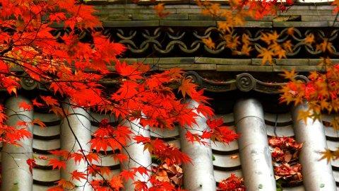 【画像】 外人 「日本の紅葉美しすぎだろ… 日本は神の祝福を受けてる!」