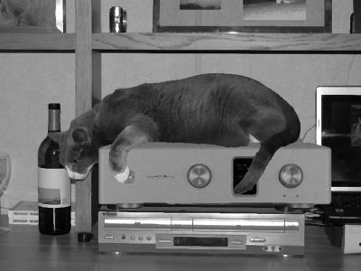 猫を寝かせたときと居ないときで音が違うことがわかった