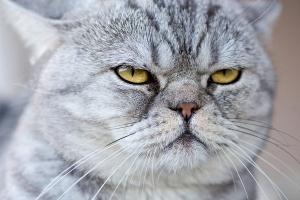 ネコの飼い主は自分のことをネコだと思っている 一方ネコは飼い主のことをネコだと思っている