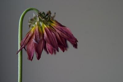 受粉しなかった花は自分から落ちるんだよ