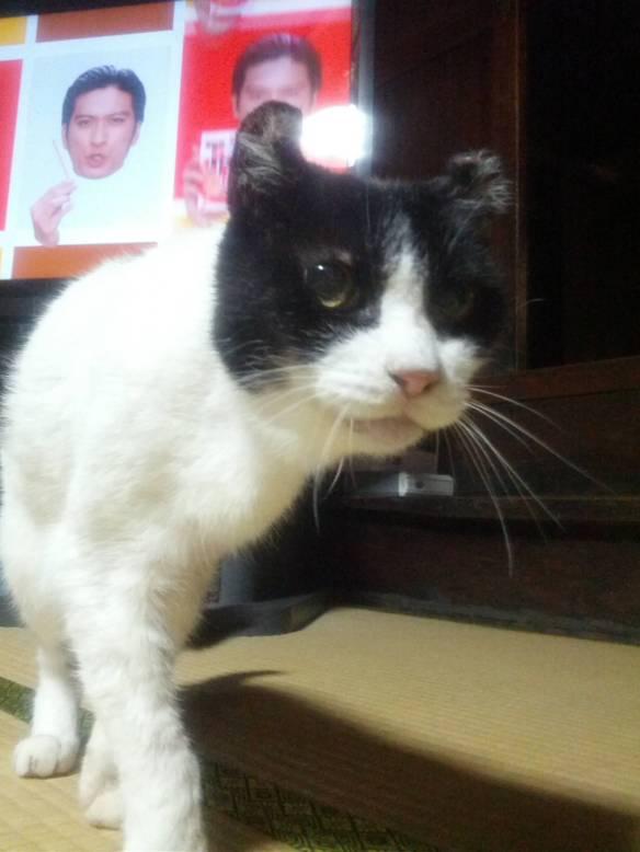 【画像あり】今年21歳を迎える我が家の猫がwwwwwwwwwwwwwww