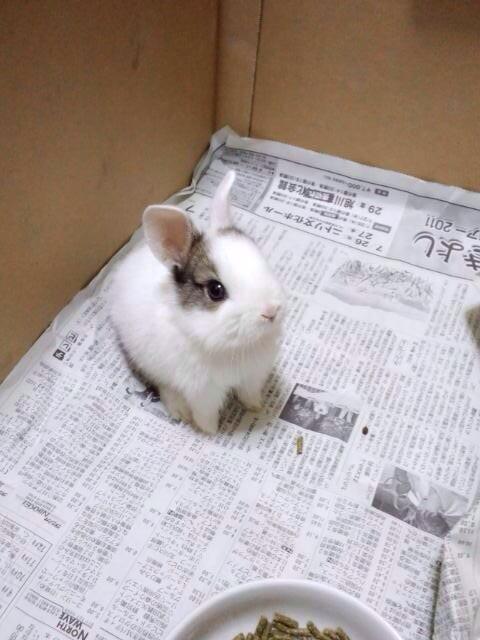【画像】腐りきった心をかわいい動物の画像で癒すスレ