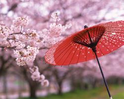 日本が唯一、絶対的に世界1位のものって・・・