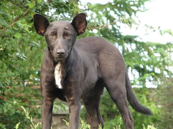 外国人「プーチンそっくりな犬見つけたwwwwwwwwwwwww」