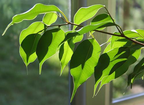 母ちゃんが育ててる観葉植物に塩水かけて枯らしてやったwwwwww