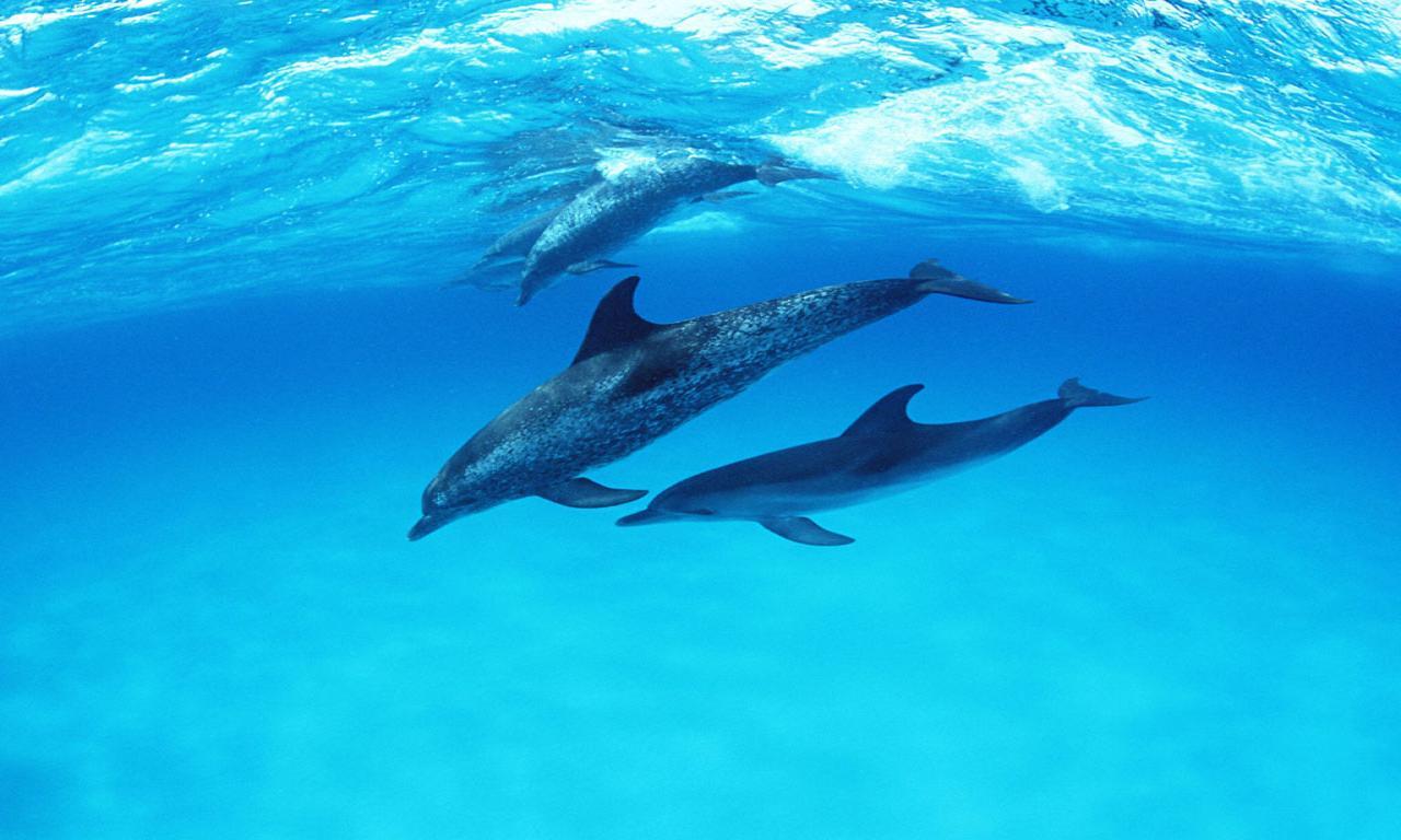 Blue Anime Wallpaper 【イルカ】cute Dolphins  きゃわわタイムス 画像に直接コメント!かわいいアニマル写真の集まる動物園♪