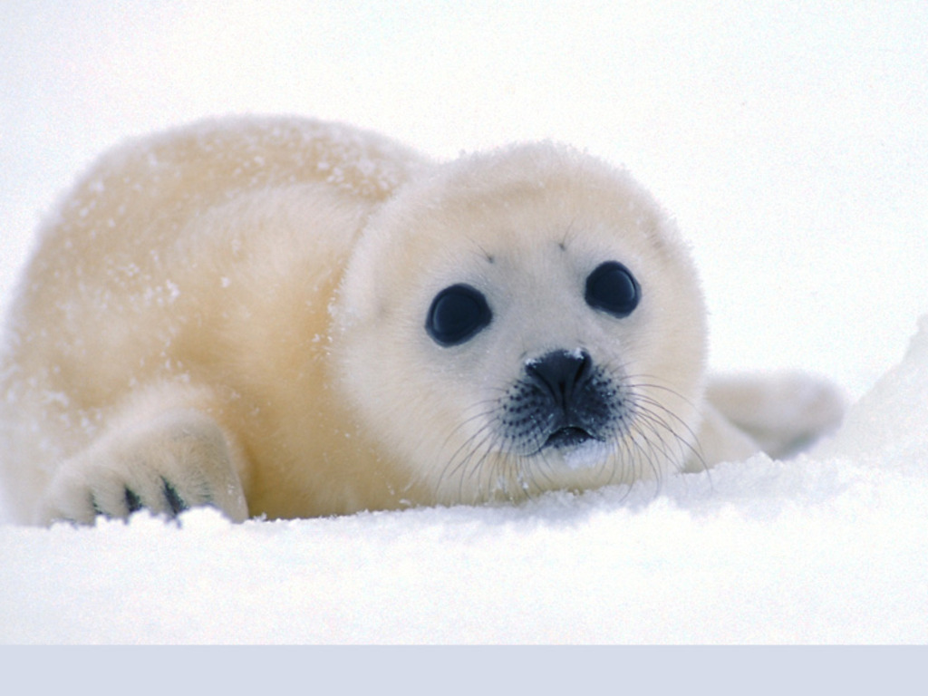 Cute Small Sad Girl Wallpaper 【いろいろ】雪と白いきゃわわ達|きゃわわタイムス 画像に直接コメント!かわいいアニマル写真の集まる動物園♪