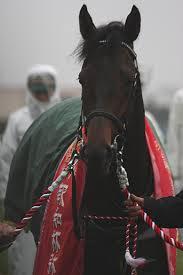 【競馬】 「晩節を汚した馬」 ←どの馬を思い浮かべた?