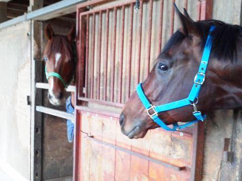 【競馬】 長期休養中の中央現役馬トップ40・2016
